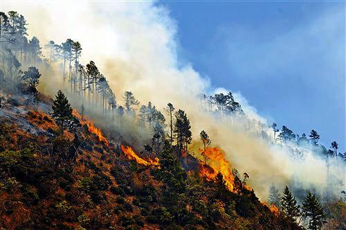 云南香格里拉发生森林火灾 两千人扑救